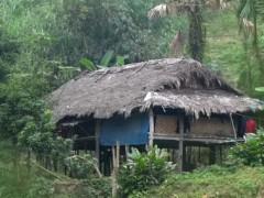越南10岁男童失去全家人 住破屋种菜养自己