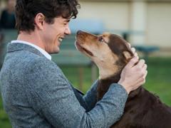 """《一条狗的回家路》影评 """"泰瑞""""的疯狂之旅"""